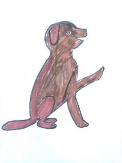 4.-Koira